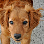 10 pravidel psího terapeuta