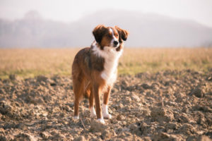 dog-692247_1280
