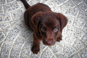 puppy-1047722_1920