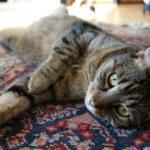 15 důvodů, proč si pořídit kočku