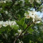 11 docela neoriginálních důvodů, proč miluju jaro