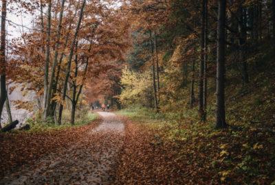 cesta podzim